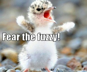 funny, fuzzy, and bird image