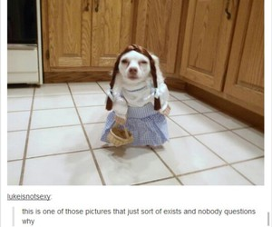 dogs, funny, and humor image