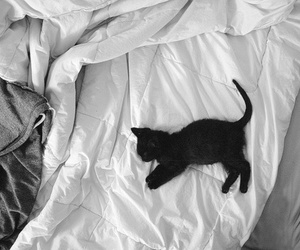cat, bed, and black image