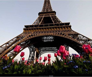 flowers, paris, and beautiful image