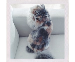 cat ., looking., and instagram. image