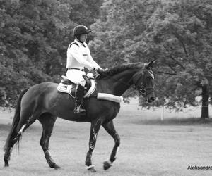 black, cavallo, and cheval image