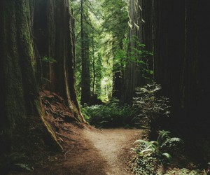 forest, nature, and beautiful image