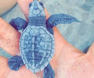 animal, beach, and turtle image