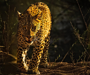 beauty, wild, and claws image