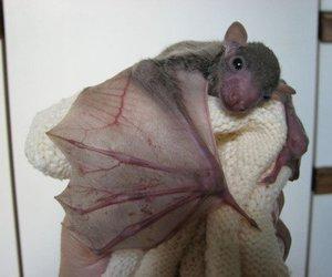 bat and animal image