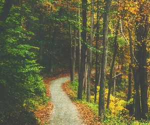 autumn, trees, and forest image