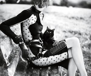 fashion and cat image
