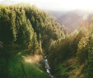 forest, morning, and طبيعه image