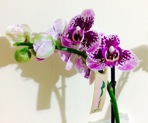 flowers, orchid, and love image