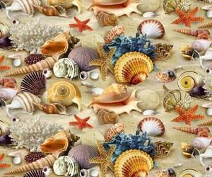 shell, sea, and sand image