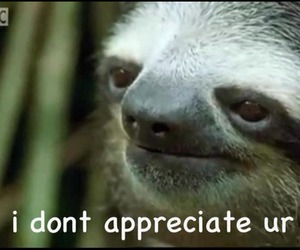 sloth, funny, and meme image