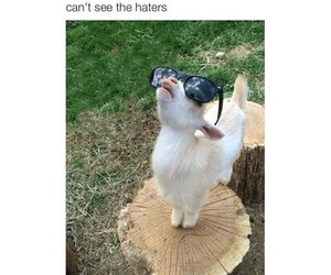 haters, funny, and goat image
