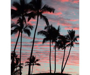 palm trees, atardecer, and nature image