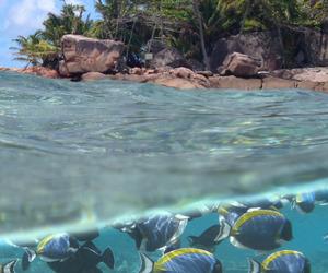 fish, sea, and summer image