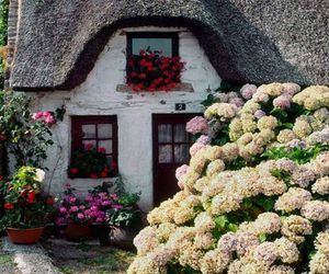 cottage, home, and flowers image