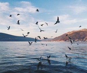 bird, sea, and nature image