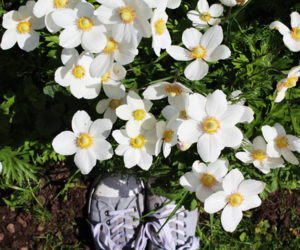 flowers, grey, and shoes image