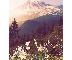 beauty, flower, and mountain image