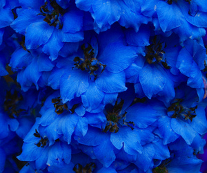 flowers, blue, and tumblr image