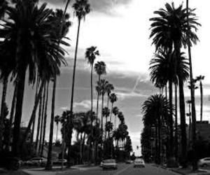 black, white, and l.a image