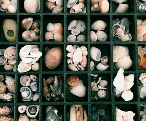 beach, ocean, and seashells image