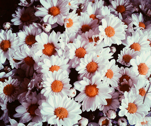 flowers, love, and flores image