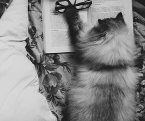 cat, book, and glasses image