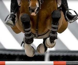horse and jump image