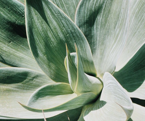 plants, green, and tumblr image