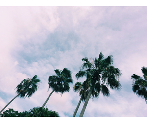 clouds and palm trees image