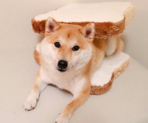 bread, dogs, and kawaii image