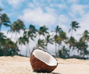 beach, coconut, and photography image