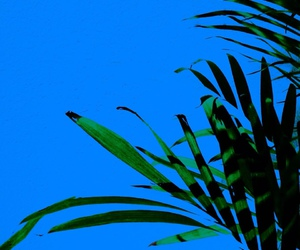 blue, pale, and plants image
