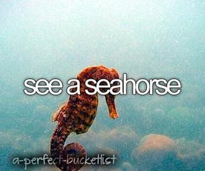 seahorse, before i die, and animal image