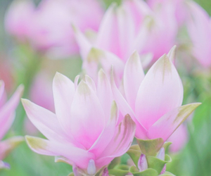 flowers, pastel, and summer image
