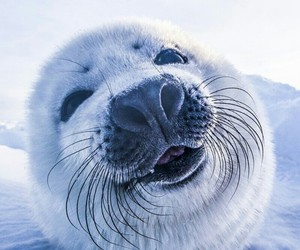 adorable, seal, and nature image
