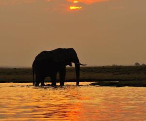 elephant, animal, and woman image