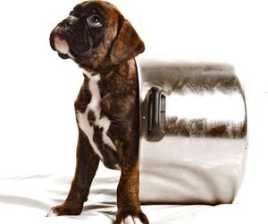 puppy, cute animals, and baby animals image