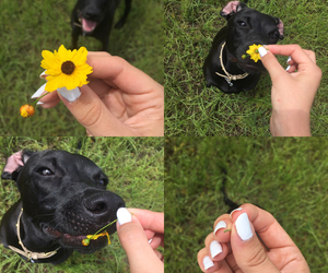 black, black lab, and blooming image