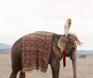 elephant, animal, and travel image