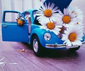 daisy, blue, and car image