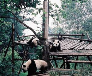 panda, nature, and green image