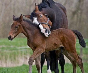 equine, foal, and horses image