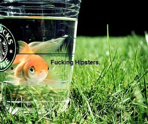 fish, cute, and love image