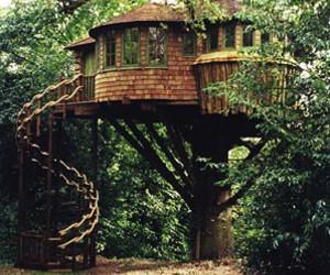 house, tree house, and tree image