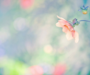 pastel, dreamy, and flowers image
