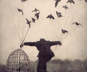bird, fly, and cage image