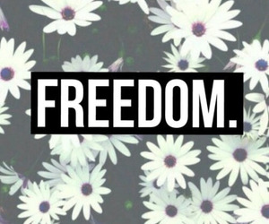 freedom, flowers, and wallpaper image