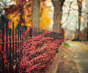autumn, flowers, and fall image